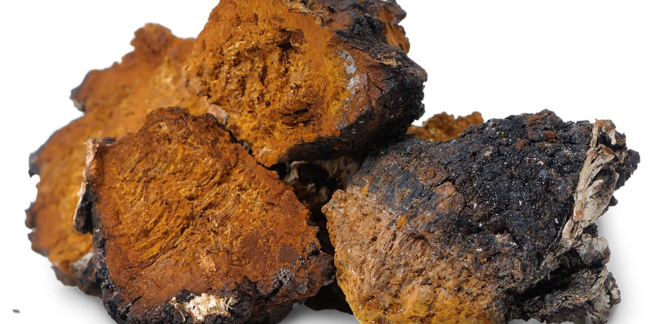 chaga mushroom (Inonotus obliquus) extracts in the Vero cells infected with the herpes simplex virus