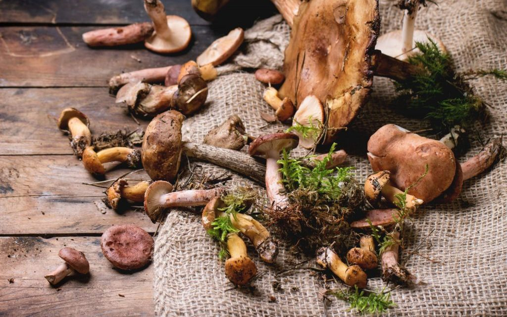 Medicinal Mushrooms against Influenza Viruses