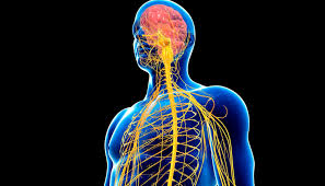 The Role of Glutathione in Viral Diseases of the Central Nervous System